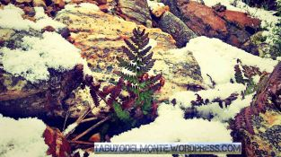 Tabuyo nieve 15_10